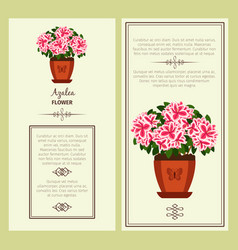 azalea flower in pot banners vector image