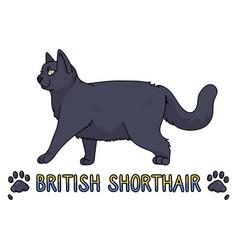 Cute cartoon british shorthair cat with text vector