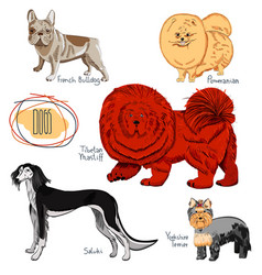 dog collection on white background vector image