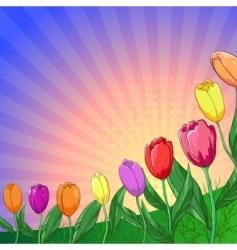 Flower background tulips vector