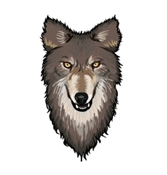 Gray Wolf Head vector