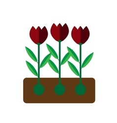 Tulip grows on white background flat vector image