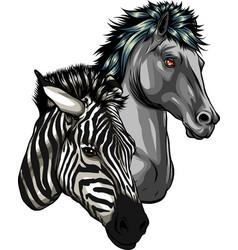 Zebra and horse heads profile vector