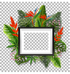 picture frame with bird of paradise in background vector image vector image