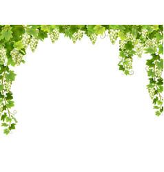 white grape floral frame vector image
