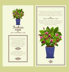 Fuchsia flower in pot banners vector