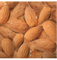 realistic almonds macro background vector image