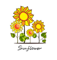 sunflowers and green leaves vector image