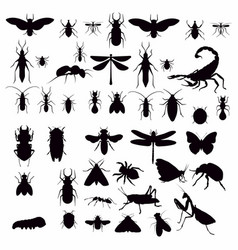 with insect silhouettes isolated on white vector image