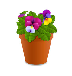 Flower pansy vector