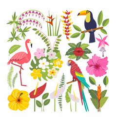set of tropical birds vector image