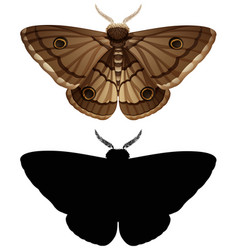 Set of colour moth and silhouette vector