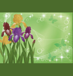 flowers iris and butterflies silhouettes vector image vector image