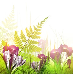 spring meadow with crocus flowers vector image vector image