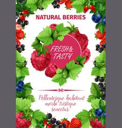 poster of fresh garden berries vector image
