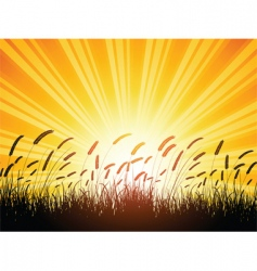 wheat silhouette vector image vector image