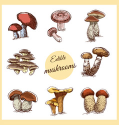 Edible mushrooms color sketches vector