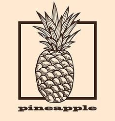 Hand drawn pineapple vector