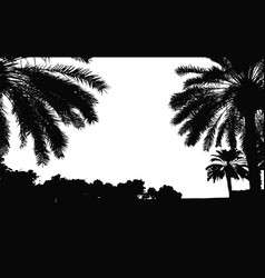 palm trees silhouette coconut palm tree vector image