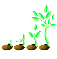 phases plant growth little green sprout seedling vector image