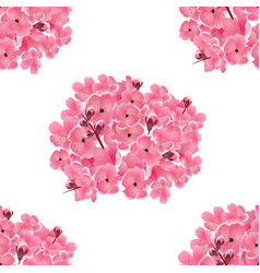 Sakura bouquet of pink cherry flowers isolated vector