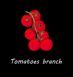 tomatoes branch isolated on black background vector image