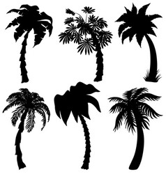 set of tropical palm silhouettes vector image vector image