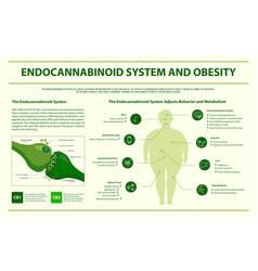 endocannabinoid system and obesity horizontal vector image