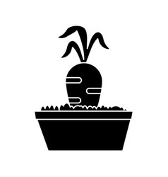 Garden bed carrot pictogram vector
