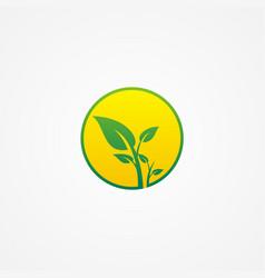 plant green leaf organic beauty logo vector image