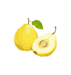 Quince apple fruit tropical exotic fruits food vector