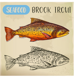 sketch of brook trout or squaretail seafood fish vector image