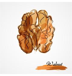 walnut half vector image
