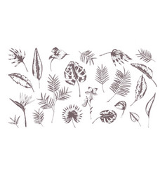 set of exotic leaves of different plants hand vector image vector image