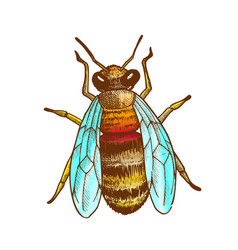 Color striped bee flying insect animal top view vector