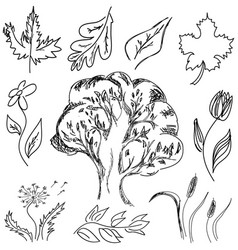 drawn tree and flowers vector image