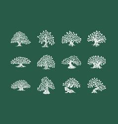 Huge and sacred oak tree plant silhouette logo vector