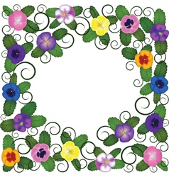 Pansies frame vector