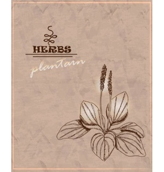 Vintage background with plantain on old paper vector image