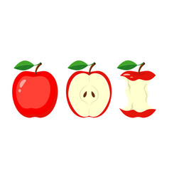 whole red apple half apple slice bitten apple vector image