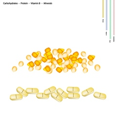 Corn Seed with Vitamin B and Minerals vector