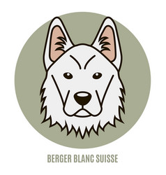Portrait berger blanc suisse vector