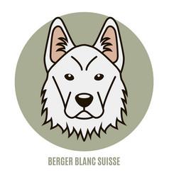 Portrait of berger blanc suisse vector