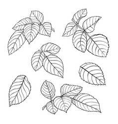set beautiful black and white rose leaves vector image