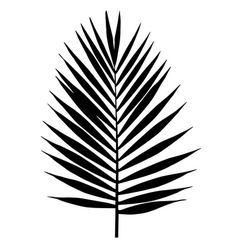 Palm leaf silhouette Tropical leaves vector image vector image