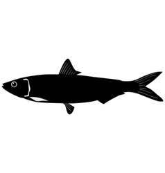 Silhouette of sardine vector image vector image