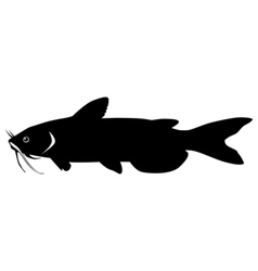 Silhouette of catfish vector image vector image