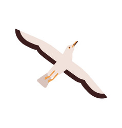 cartoon seagull take off straighten wings vector image