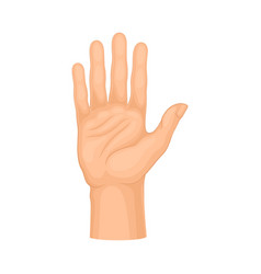 Detailed palm hand gesture on vector