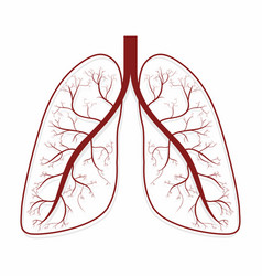 Lungs human lungs anatomy symbol vector